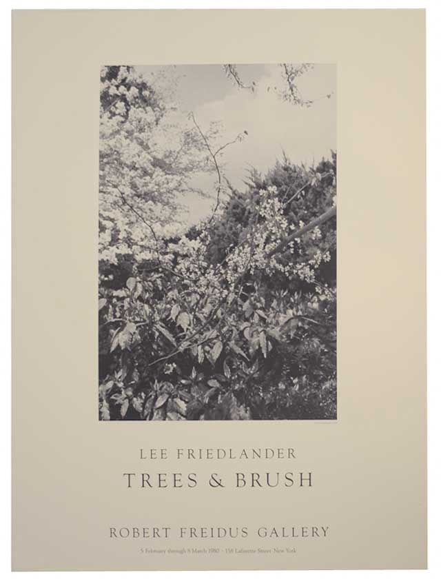 Trees & Brush. Lee FRIEDLANDER.